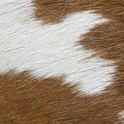 Brown / White Pony